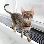 尻尾の動きの注目すれば猫の気持ちが読み取れる!?