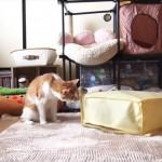 carpetcatdog_R