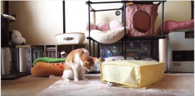 新しいカーペットに反応する犬と猫の違い
