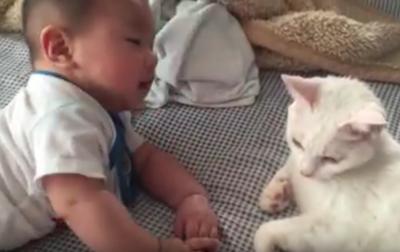 ぶつかりそうでハラハラ!赤ちゃんと猫