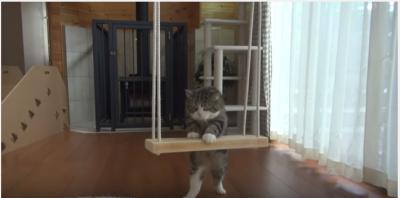 ブランコに乗る特訓をする猫のまるくん