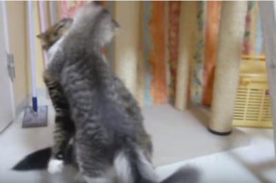 見ている方がノックダウン!猫たちの可愛い戦い
