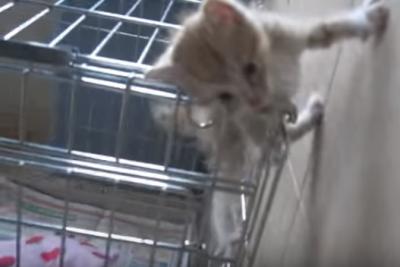 小さな仔猫だからこそ出来る技!子猫の脱走?