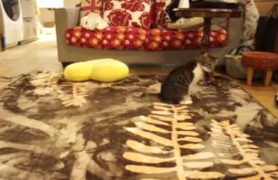 何その歩き方!?お尻で歩く猫