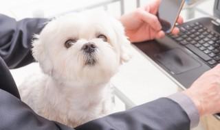 社員犬が急増中! オフィスにもたらす効果とは?