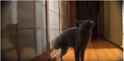 目にもとまらぬ速さ?ドアを高速ノックする猫