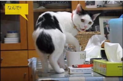 飼い主さんと大阪弁で話をする猫