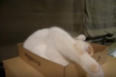 箱の中で首をかしげ過ぎる可愛い猫