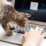 なぜ必ずやってくる!? 猫がパソコン作業を邪魔する理由