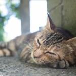 猫まみれになりたい人必見! 猫好きにはたまらない旅行先7選
