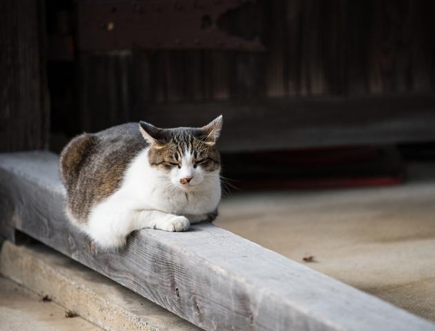 猫まみれの旅行先を訪ねるときの注意点