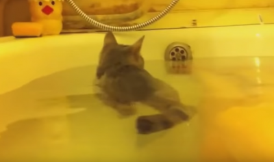 いい湯だな~!お風呂を楽しむ子猫