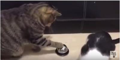 猫、ご飯のオーダーはベルを鳴らします