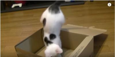 蓋付き段ボール箱で遊ぶ猫に事件が!