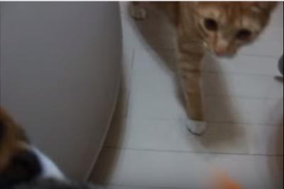 ティッシュ箱が抜けない!三毛猫のハプニング