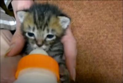 捨て猫を保護し里親を募った動画