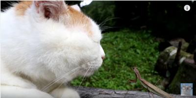 かご猫しろと、弱腰のカマキリ