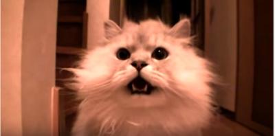 寂しかったニャー、玄関で待つモフモフ猫