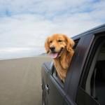 愛犬と外泊をするためにおさえておきたいドライブ時の注意点
