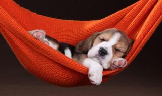 犬のいびきに要注意! そのいびき、もしかしたら病気が原因かも?