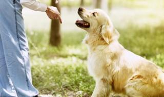 【しつけ:フレーズ編】愛犬のしつけは英語がおすすめ!