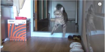 猫の留守番、カメラに映し出されたものとは!?