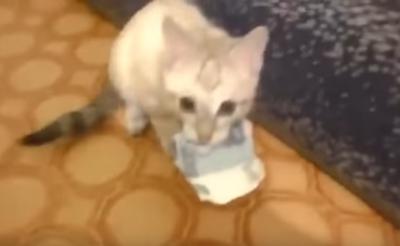 お金は大切に!大事にお金を守る猫