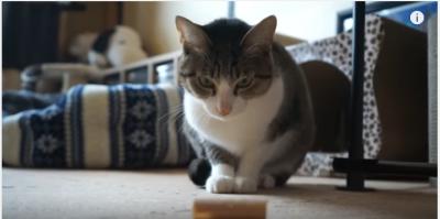 ひっつくガムテープと闘う猫