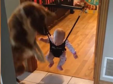 こうやるんだよ!赤ちゃんに見本を見せる犬