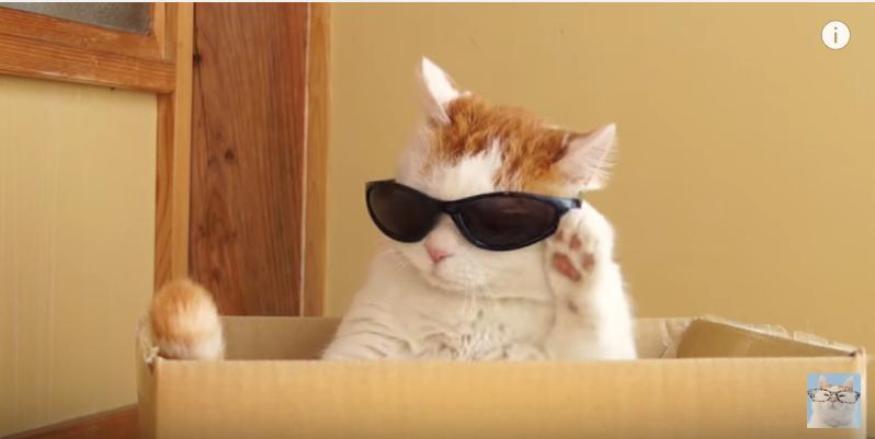 イケメン俳優も顔負け、サングラスを外す猫