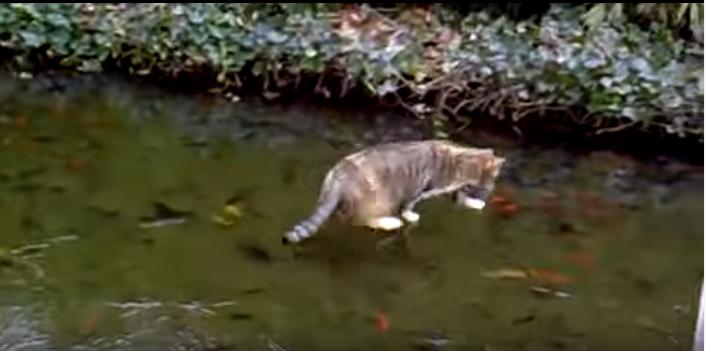 氷の上を歩く猫、危機感が一瞬で薄れる瞬間