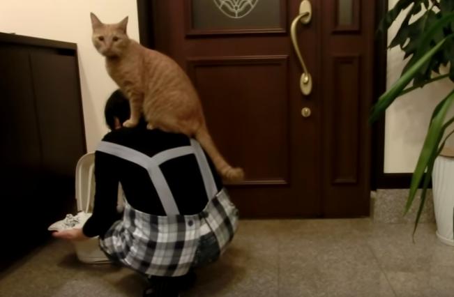 飼い主さんを踏み台にする猫たち