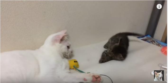 感動!地震で保護猫と先住猫の間に生まれたもの