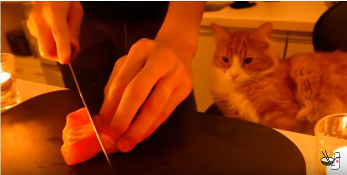 猫の手作りご飯、余りの豪華さに猫もビックリ