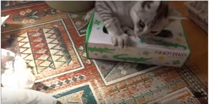 野良から家猫へ、毎日が幸せで楽しそうな子猫