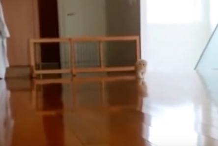 だるまさんが転んだ!?忍び寄る猫