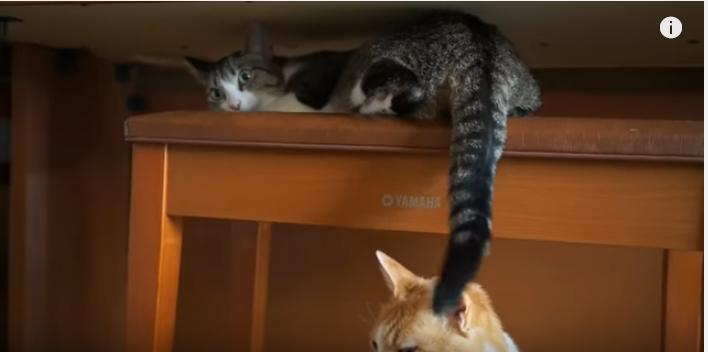 頭上で何かが・・・取り憑かれた様に耐える猫