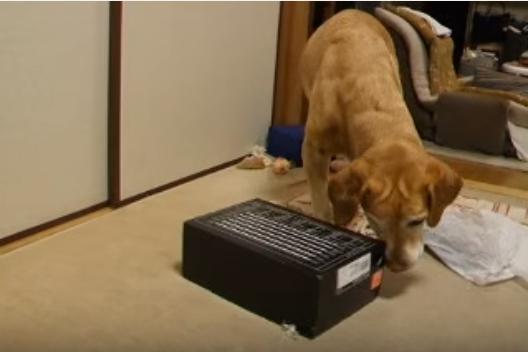 動く箱に、動じず近づく犬。中からは・・・?