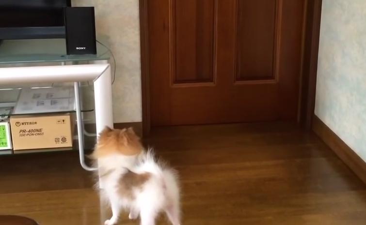 行かないで~!!置いて行かれて慌てる犬