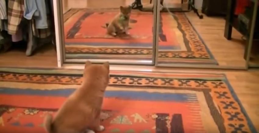 鏡よ,鏡。鏡に映るあなたはだ~れ?