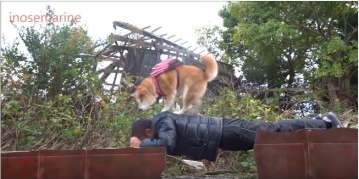 柴犬と飼い主さん、カルタコントに挑戦