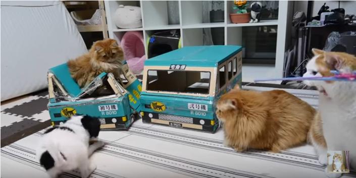 人気の猫ハウスに集まるマンチカンたちと犬