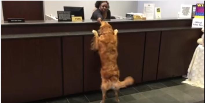 犬がカウンターに立つ、その場所とは一体!?