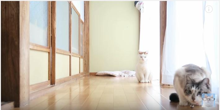 おもちゃを届ける猫、飼い主さんに投げての催促