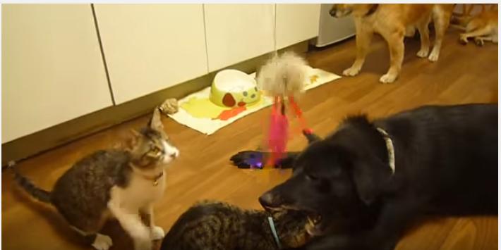 遊ぶ子猫に大きな犬がパクッ!