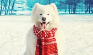 寒さに弱い犬種もいる!愛犬の健康を守る寒さ対策とは