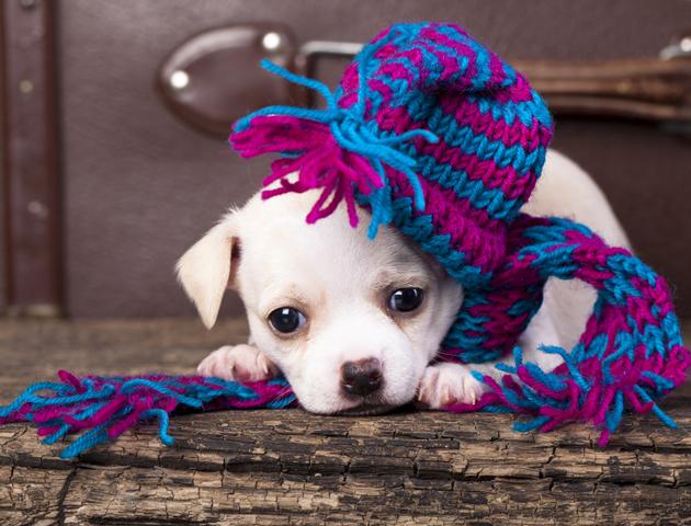 犬が「寒い」ときのサイン
