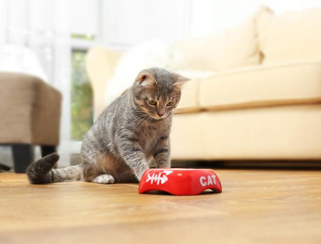 猫がごはんを食べない原因は何? 対策方法や注意点について
