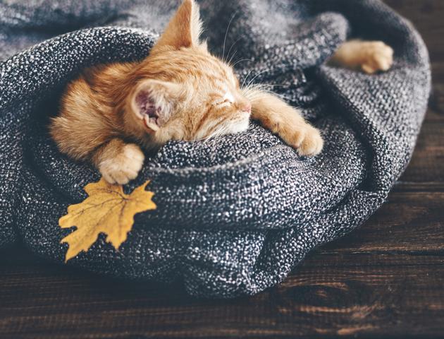 猫風邪の対策方法