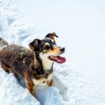 犬が雪を見て、はしゃぎ回るのはなぜ?